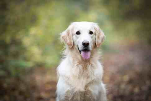 tipps-fuer-hunde-fotoshooting-foto