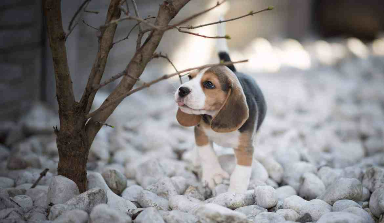 waueffekt-celia-ritzberger-foto-tipps-hund