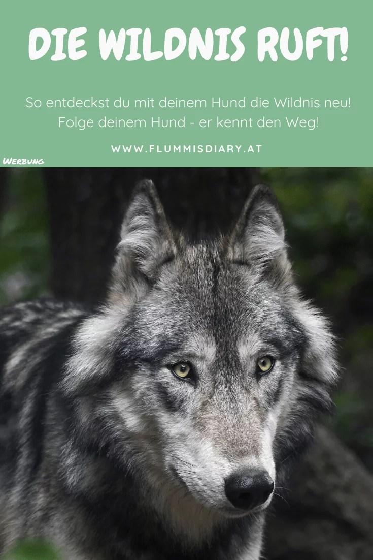 wilde-pfade-wildnis-buch-empfehlung-review