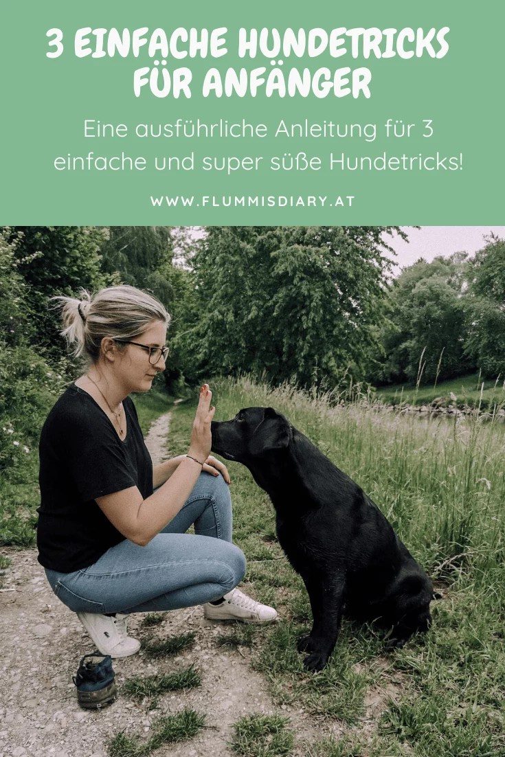 3-einfache-hundetricks-anleitung-tricksen-blog-hund