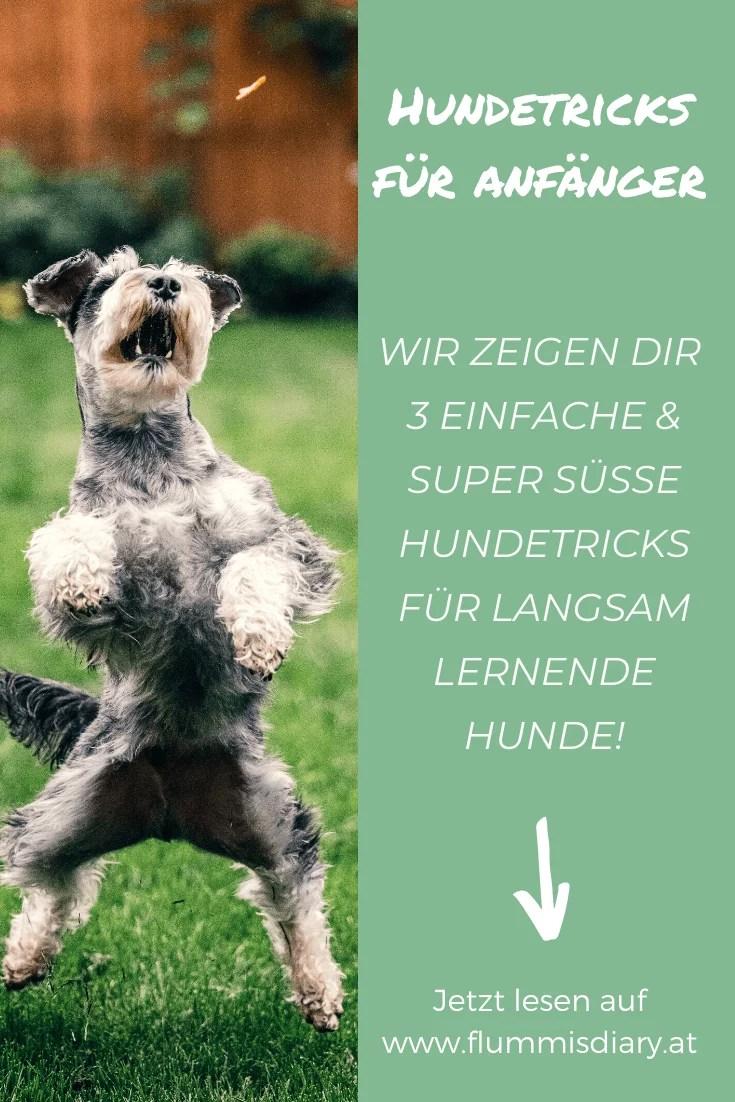 3-einfache-hundetricks-anleitung-tricksen-hund