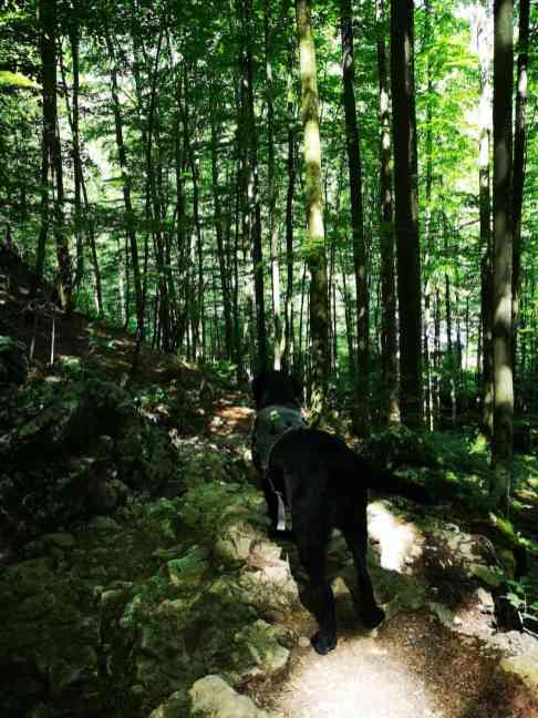 kleiner-sonnstein-mit-hund-wandern-hund