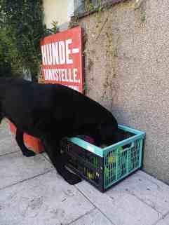 residenz-gruber-urlaub-mit-hund-spielsachen-hunde
