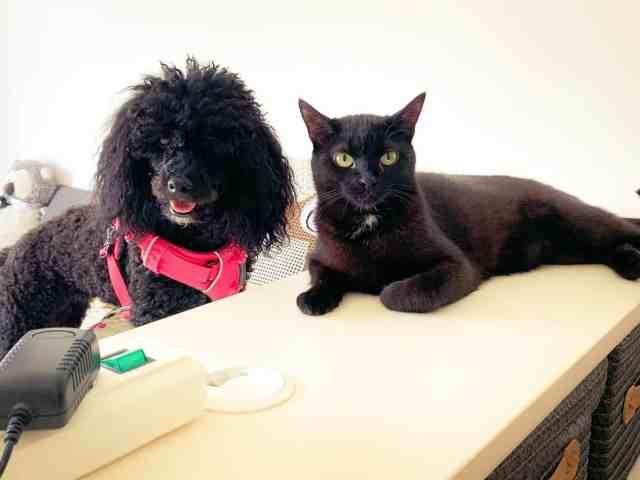 zusammenleben-hund-und-katze-tipps-hilfe-blog