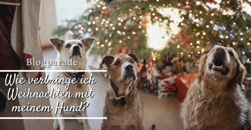 Blogparade-Wie-verbringe-ich-Weihnachten-mit-meinem-Hund