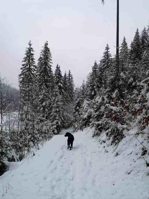 schafferteich-mit-hund-winter-wanderung-oberoesterreich