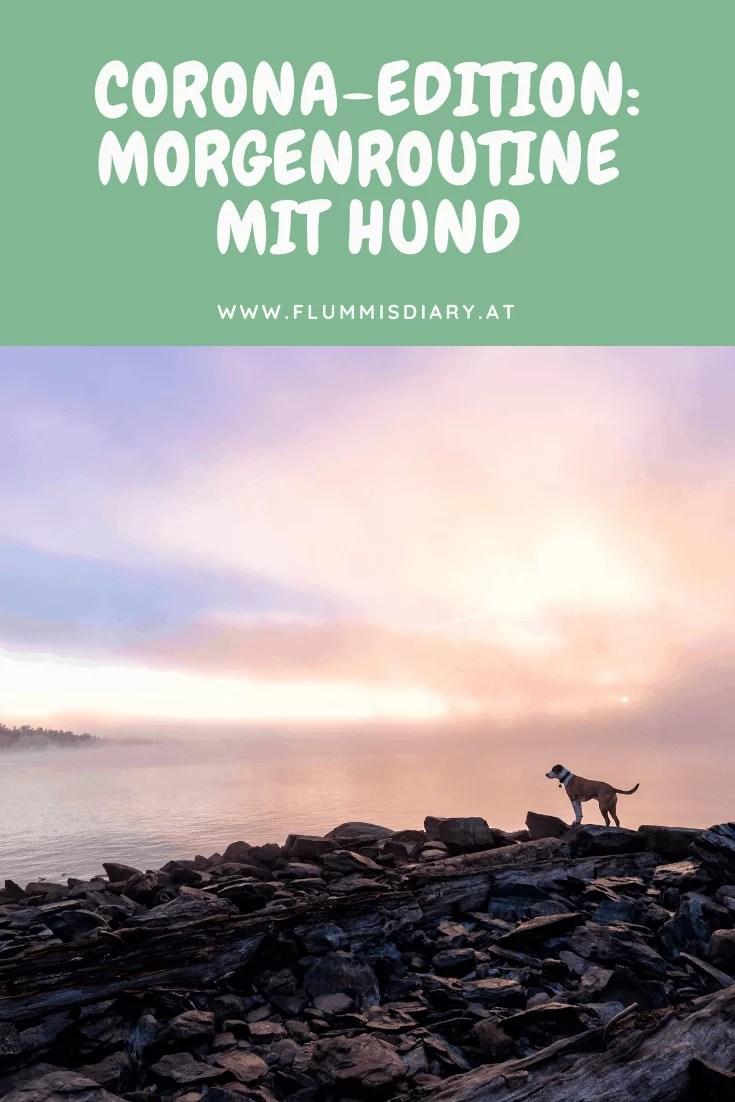 morgenroutine-mit-hund-im-home-office-tipps-flummisdiary