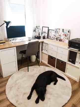 arbeitszimmer-mit-hund-home-office-hunde-officedog-buero