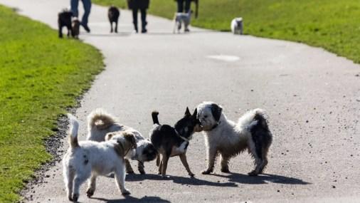 vorurteile_kleine_Hunde_im_park