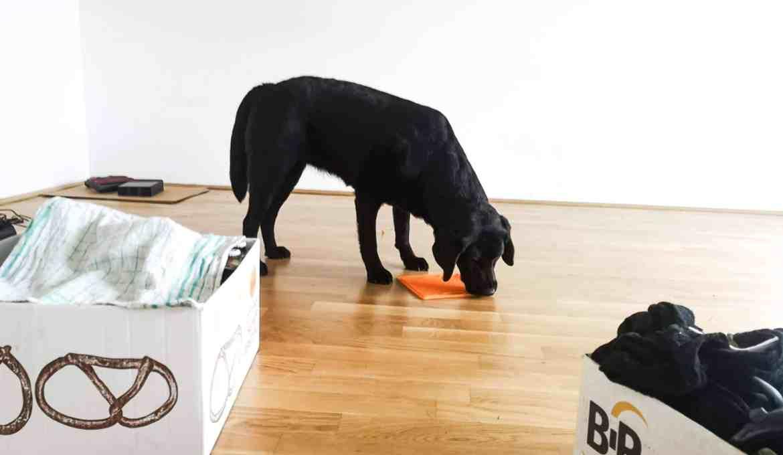 umzug-mit-hund-hilfe-tipps-siedeln