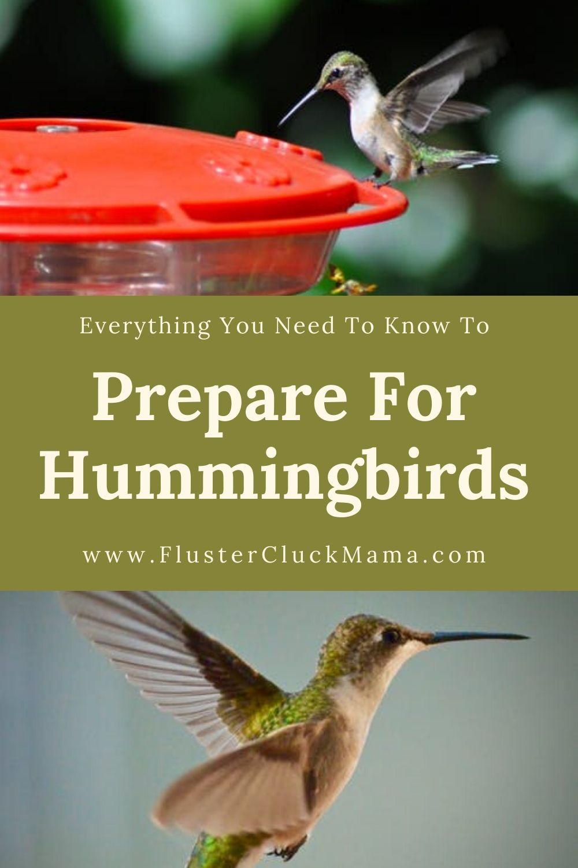 Prepare For Hummingbirds