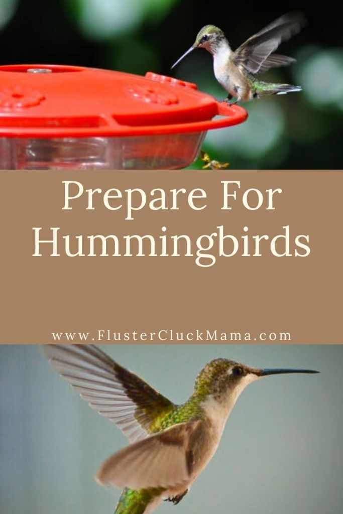 Prepare for hummingbirds