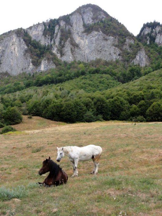 cai masivul postavarul poiana inului