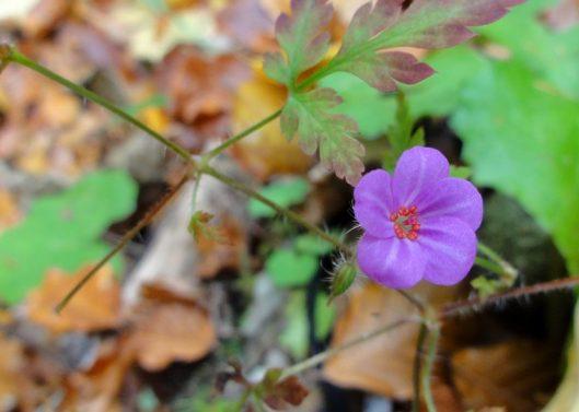 floare toamna padure