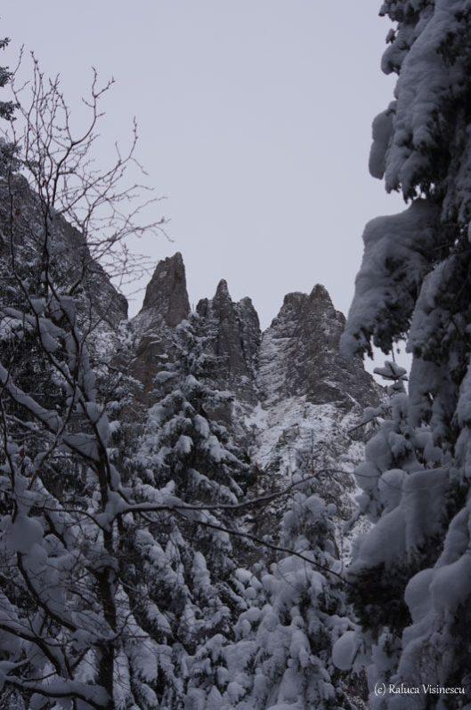 acele morarului iarna