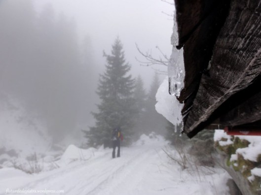 traseu muntii retezat cabana turistica
