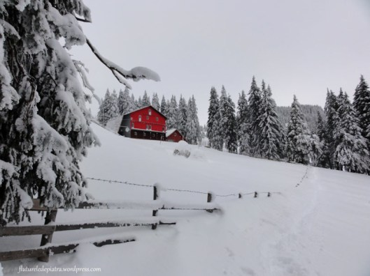 cabana poiana izvoarelor iarna