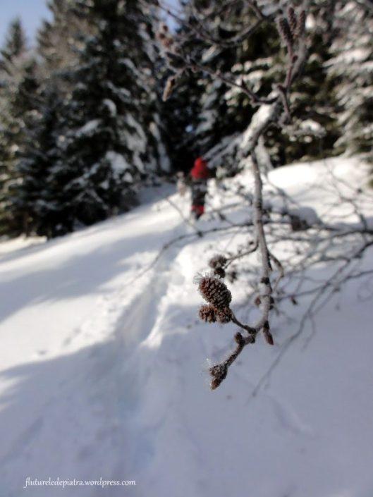 piesaj de iarna muntii carpati