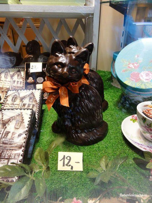 pisica din ciocolata belgia