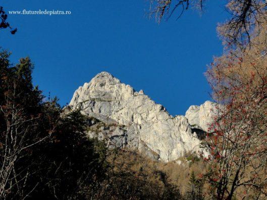 Peretele Vulturilor alpinism Munţii Bucegi