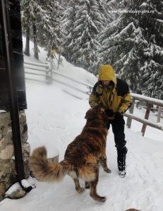 cabana curmatura iarna