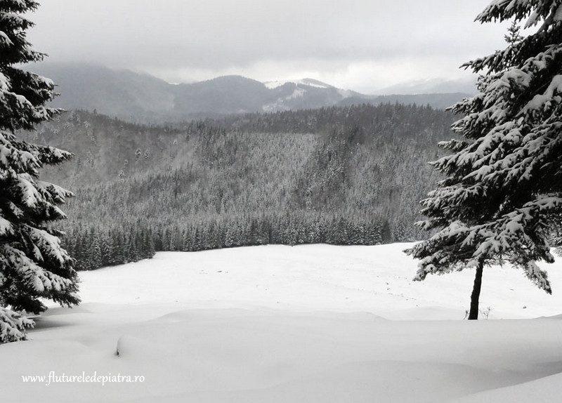 peisaj de iarna in piatra craiului