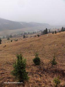 Valea Crapaturii, masivul piatra craiului
