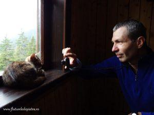 pisica pe geam munte