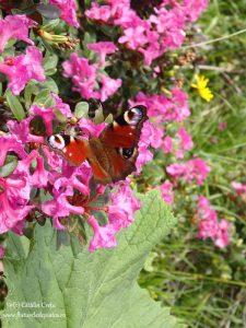 flora si fauna romania