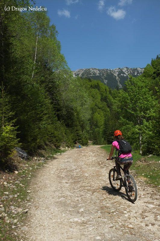 urcare din prapastiile zarnestiului la cabana curmatura, cu bicicleta