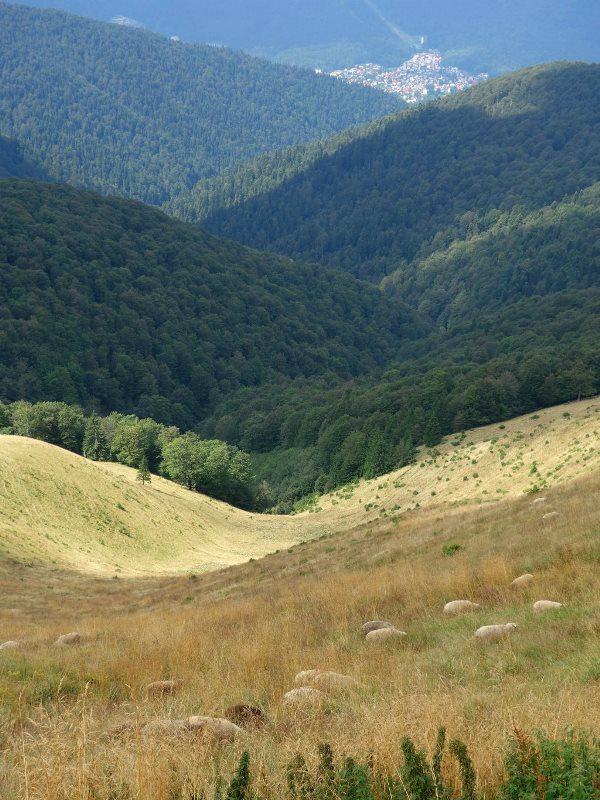bicicleta muntii baiului turmă de mioare păscând printre coline