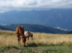 traseu bicicleta valea prahivei, muntii baiului, peisaj muntii bucegi