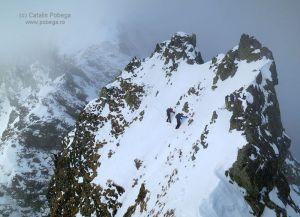 creasta vârtopel arpășel iarna. foto: cătălin pobega