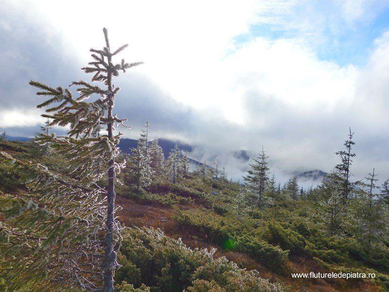 pădure de gheață în Munții Călimani, 12 apostoli