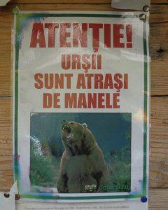 Atenție, urșii sunt atrași de manele