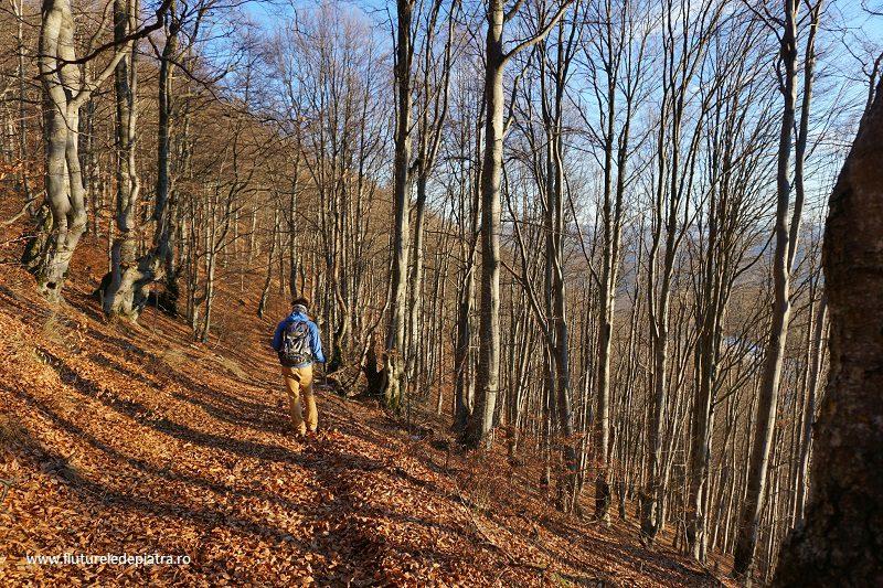 păduri bătrâne de foioase în rezervație Scărița Belioara, România