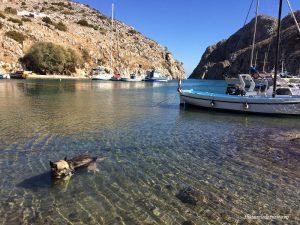 câine uitat de lume în apă, Vathy, Kalymnos