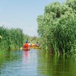 pe canale micuțe ascunse de stuf - cu caiacul in Delta Dunarii