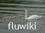 Flu Wiki swans