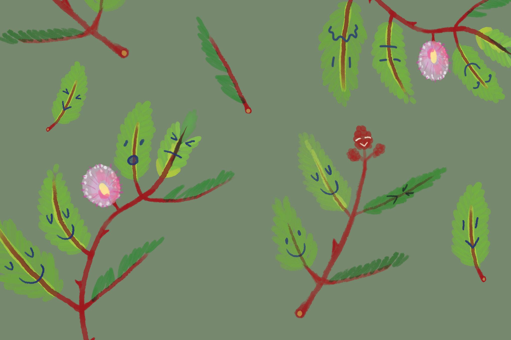 A Hui Hou - Sentiments on Sleeping Grass