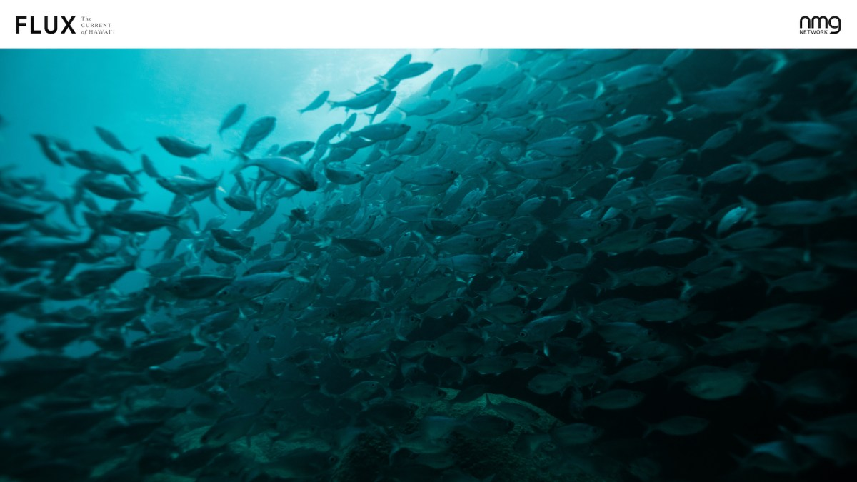 zoom hawaii fish