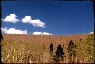 """Tree Line"" 1995, Sangre De Christo Mountains, Santa Fe, New Mexico, Landscape/Light studies series, C–print"