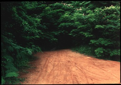 """Clay Path"", 1995, Byrd Park, Richmond, Va, Landscape/Light studies series, C–print"