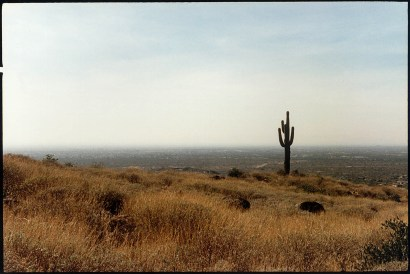 """Cactus Plain"", 1997, Sonora desert, Arizona, Landscape/Light studies series, C–print"