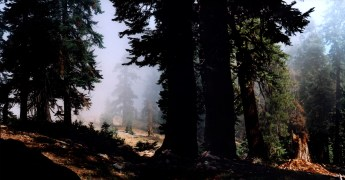 """Sequoia Mist"", 2000, Sequoia, California, Landscape/Light studies series, C–print"