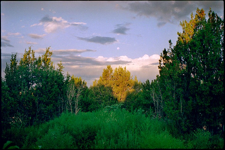 """Runyon Canyon Dusk"", 1995, Hollywood, Ca, Landscape/Light studies series, C–print"