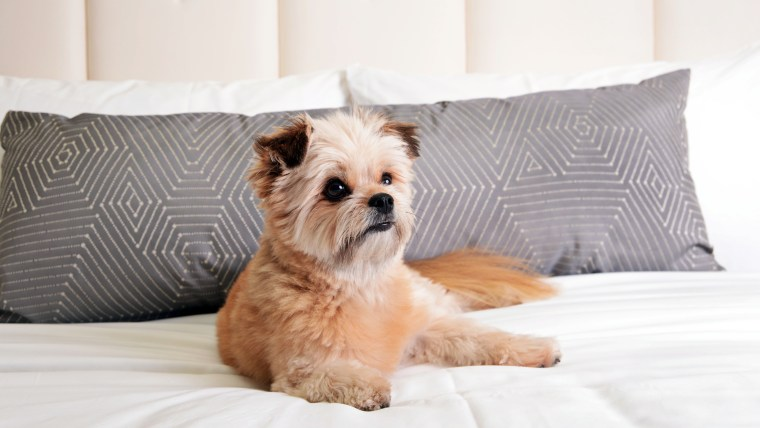 Delano Doggie Suite