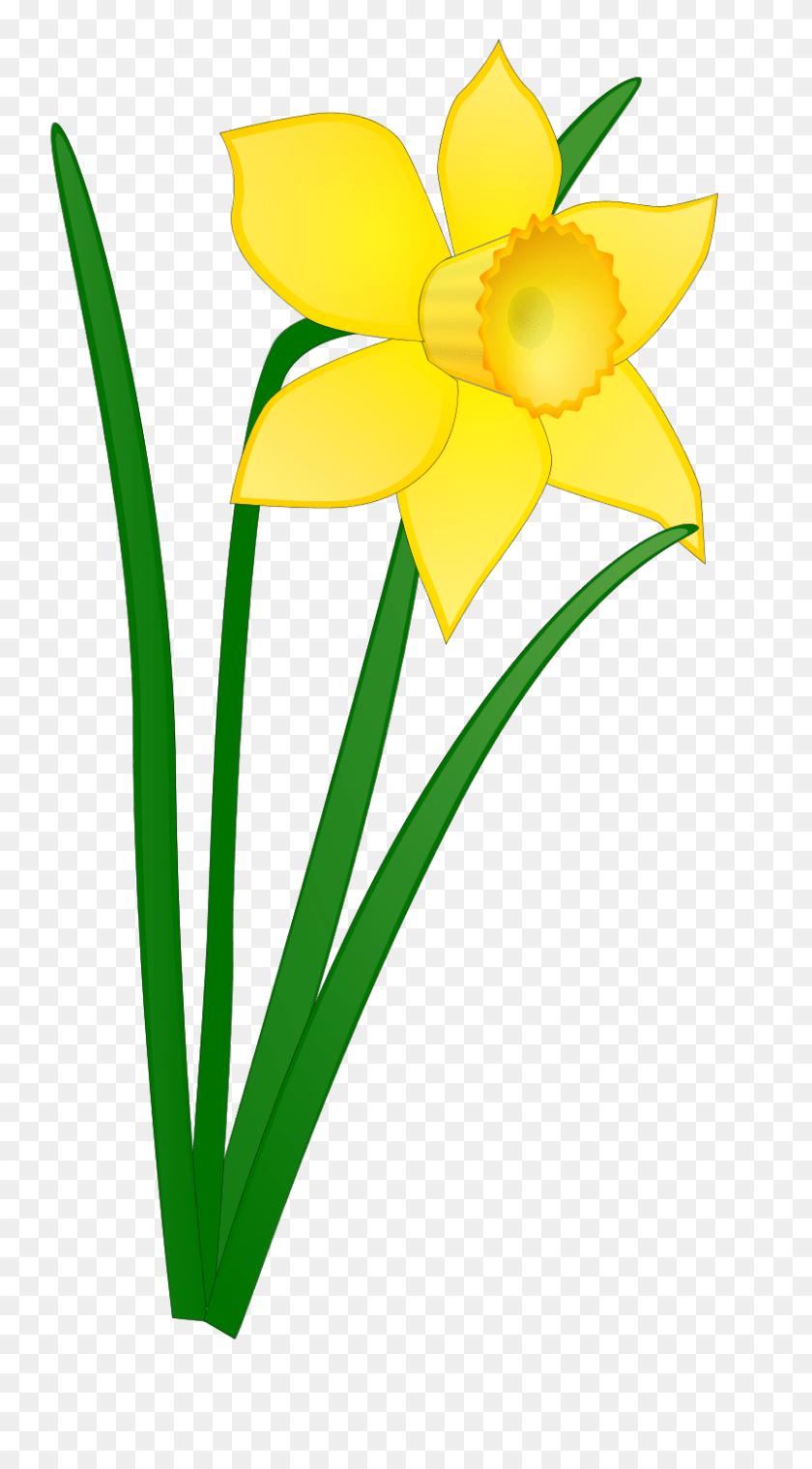 medium resolution of 800x1497 april clip art april flowers clip art