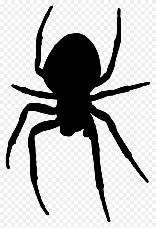 small resolution of 1602x2400 arachnid clipart halloween spider halloween spider clipart