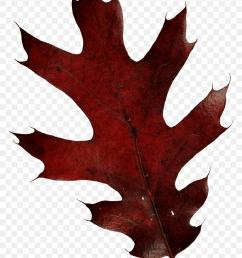 autumn leaves autumn leaf autumn leaves leaves tree leaves png [ 840 x 1173 Pixel ]